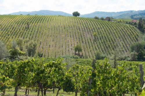 winegrowing-972895 960 720