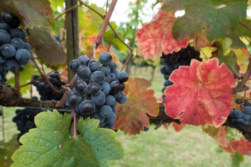 winegrowing-973027 960 720