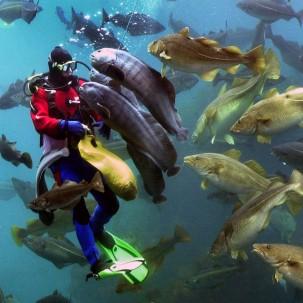 atlanterhavsparkenroger-engvik 2500x1250